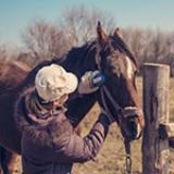horse course