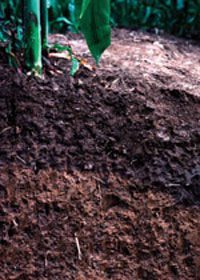 Stretched Soil