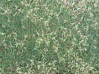Bermudagrass Control In Cool Season Turf Turfgrass