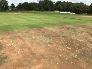 Bentgrass recovery from the summer will be on display at the Field Day.
