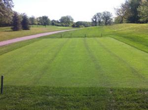 Tees Seeded