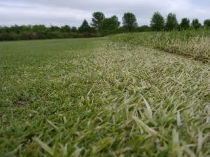 Fall is in the Air | Turfgrass