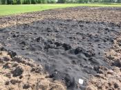 Biochar in Field
