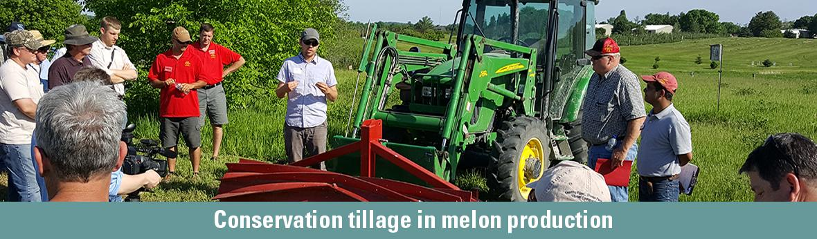 Conservation tillage in melon production