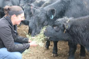 Emily Boettcher feeding her cattle.