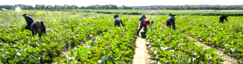 Workers in Field